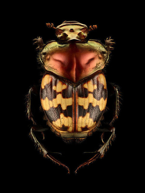 These Awe-Inspiring Photos Show Just How Beautiful Insects Can Be | Real Estate Plus+ Daily News | Scoop.it
