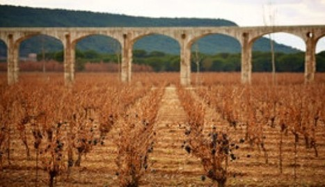 Vega Sicilia, the pride of Spain | Vitabella Wine Daily Gossip | Scoop.it