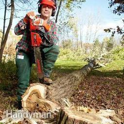 How to Cut Down a Tree | Tree Cutting Tips in Atlanta GA | Scoop.it