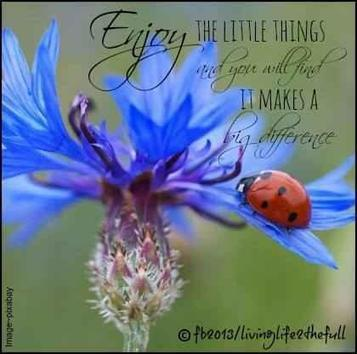 La citation du jour : Enjoy the little things and you will find!  It makes a big difference | Méli-mélo de Melodie68 | Scoop.it