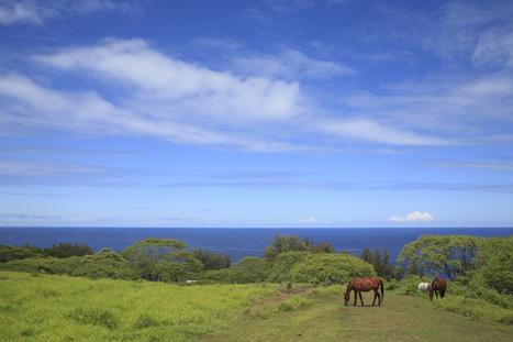 Energy Prices Shock Hawaii Farmers Into Alternatives | Amocean OceanScoops | Scoop.it