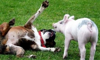 Petition : Pour un Ministre du bien-être Animal ! | Massages-bien-être | Scoop.it