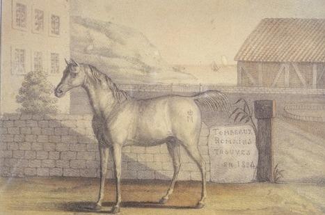 Sauver Vizir, glorieux étalon de Napoléeon | L'observateur du patrimoine | Scoop.it