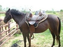 Types of Saddles for the Right Types of Horses | Ranch Saddle | Scoop.it