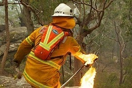 NSW bushfires: Banksia cones the latest weapon in the battle to defend homes | Australian Plants on the Web | Scoop.it