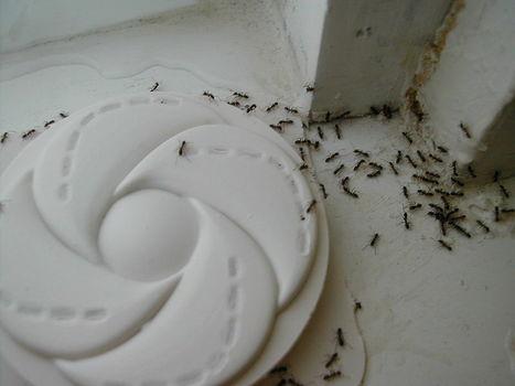 Revue de presse des fourmis : À travers les labyrinthes | EntomoScience | Scoop.it
