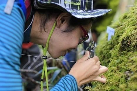 In Japan, Moss Gathers New Fans - Wall Street Journal | Zen Gardens | Scoop.it