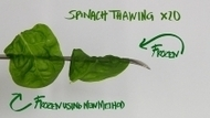 Veggies, fruits stay fresh with new freezing method - Lund University | Food Technologies- Creating a Healthy Lifestyle through Understanding Food Production and Preparation. | Scoop.it