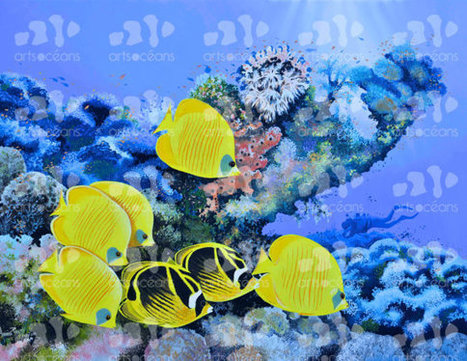 Yellow Butterfly fish at Soma Bay - Pascal Garnier Original Oil On Canvas Paintings | Diving with Gopro Cameras | Scoop.it