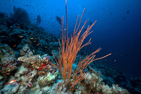 Shutterstars Featured Contributor: Undersea | Impact of fishing on marine habitats | Scoop.it