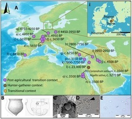 ALLEMAGNE/DANEMARK : Phytoliths in Pottery Reveal the Use of Spice in European Prehistoric Cuisine | World Neolithic | Scoop.it