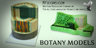 How imperative are the botany models for school laboratories? | New York Microscope Company | Scoop.it
