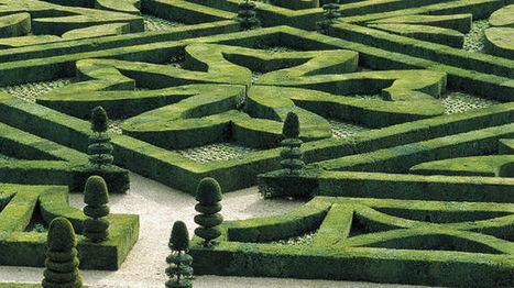 Le buis dans tous ses états ! - France Inter | Les colocs du jardin | Scoop.it