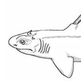 New Prehistoric Shark Looked Like the Devil : DNews | Skylarkers | Scoop.it