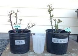 #MooPooTea and No Tea | Annie Haven | Haven Brand | Scoop.it