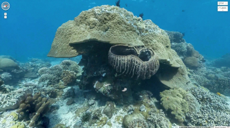 Scientists ask the public for help saving coral reefs – with Google Street View - Geek | My Funny Africa.. Bushwhacker anecdotes | Scoop.it