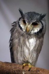 Intelligence: The Evolution of Night Owls | Psychology Today | Fun with Psychology | Scoop.it