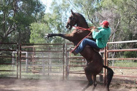 Meet Ben: Farrier/Equine Dentist/Horse Trainer and Breaker   Quest 2&3: Meet my fellow OH&S friends   Scoop.it