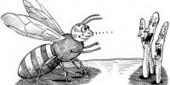T-Bee | MicrobiologyBytes | Scoop.it