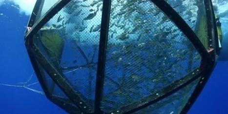 L'Aquapod, des cages pour l'élevage des poissons | Animal Nutrition Spotlight | Scoop.it