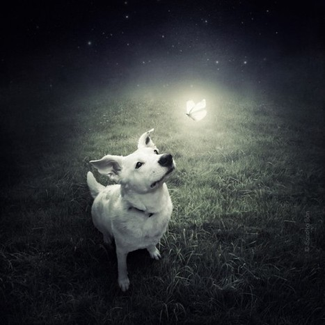 """Artist Creates Surreal Images To Promote Shelter Animals 