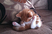The 25 Most Awkward Cat Sleeping Positions | Les chats c'est pas que des connards | Scoop.it