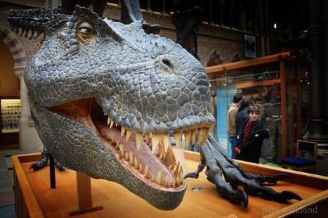 Oxford Museum of Natural History | Dinosaur Roar! | Scoop.it