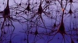 Neural Simulations Hint at the Origin of Brain Waves   Neuroscienze   Scoop.it