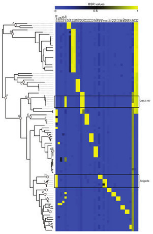 The large-scale blast score ratio (LS-BSR) pipeline: a method to rapidly compare genetic content between bacterial genomes | Viruses and Bioinformatics from Virology.uvic.ca | Scoop.it