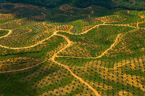 WWF - Palm Oil | Say No To Palm Oil | Scoop.it