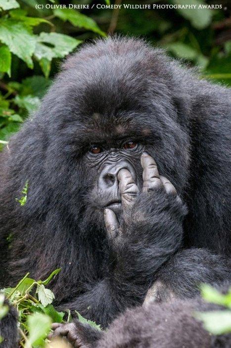Voici les 13 animaux les plus drôles de 2015. Les lauréats des Comedy Wildlife Photography Awards. | La Photographie est ma vision par Cédric DEBACQ | Scoop.it