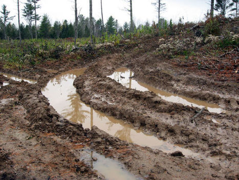 Scott Walker's budget restricts DNR review of timber cutting | Timberland Investment | Scoop.it