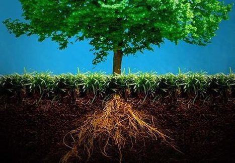 The Dirt on Climate Change - Pacific Standard | biochar | Scoop.it