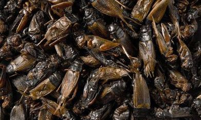 How insects could feed the world | Food & Nutrition Security in East Africa | Scoop.it