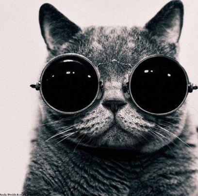Quelle forme de lunettes de soleil pour mon visage ? | Parler d'Amour | Optical Service | Scoop.it