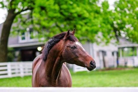 Memorial For Cigar To Be Held Nov. 14 | Horse Racing News | Scoop.it