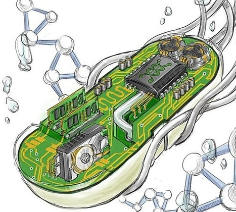 Scientists Built a Biological Computer Inside a Cell | SynBioFromLeukipposInstitute | Scoop.it