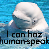 Easily the best thing you'll hear all week: a beluga whale mimicking human speech | Conservation & Environment | Scoop.it