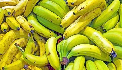 Conseils santé d'un biochimiste: mangez des bananes pas mûres et ... - L'Express   Cool way of living and eating   Scoop.it