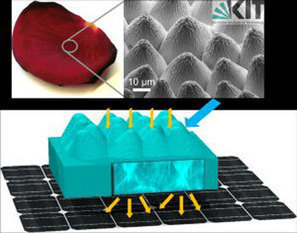 Flower power: Photovoltaic cells replicate rose petals | Biomimétisme, Biomimicry, Bioinspired innovation | Scoop.it