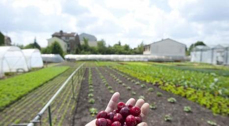 Mieux maîtriser les quantités utilisées: la recherche au service de l'agro-écologie - Alim'agri | Agriculture et Alimentation méditerranéenne durable | Scoop.it