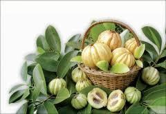 How Does Garcinia Cambogia Help you to Reach Your Weight Loss Goals | Weight Loss Coffee | Scoop.it
