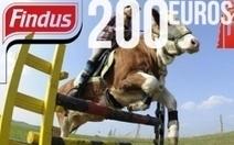Viande de cheval : Findus plus critiqué par les médias que Spanghero | Crise Alimentaire | Scoop.it