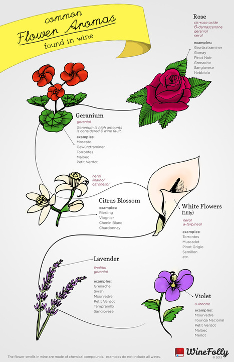 6 Common Flower Aromas in Wine | Wine Folly | Wine, history and culture... | Scoop.it