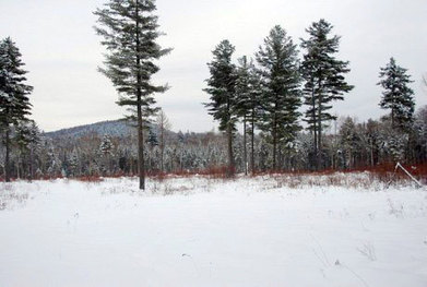 "A million acres of Adk timberland becoming ""junk""? 