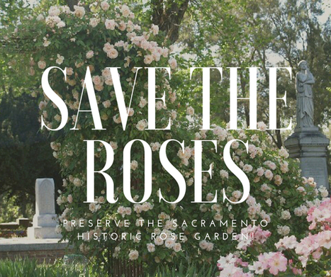 Who The Heck Cares Whether You Save A Rose? | All Things Rose | Scoop.it