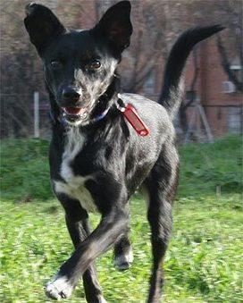 Los perros reconocen emociones de otros según para dónde ... - Publico.es   la vida   Scoop.it