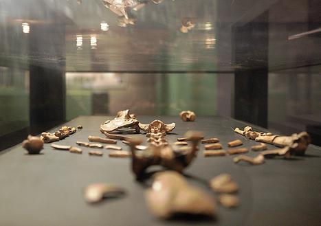 Des scientifiques ont trouvé comment est morte Lucy, la plus célèbre des australopithèques. Une mort violente... | Aux origines | Scoop.it