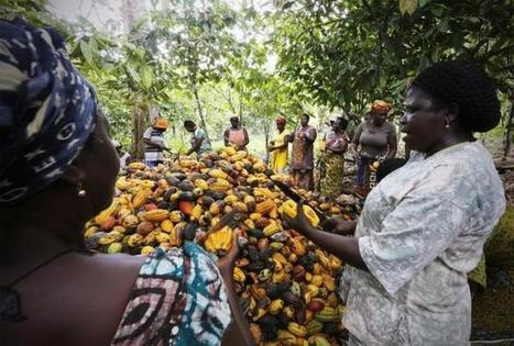 Cash-strapped Ivorian farmers struggle to ready next cocoa crop | Agriculture news | Scoop.it