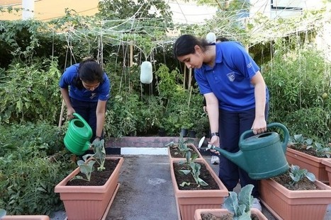 Dubai schools encouraged to teach children how to grow fruit and vegetables | The National | Vertical Farm - Food Factory | Scoop.it